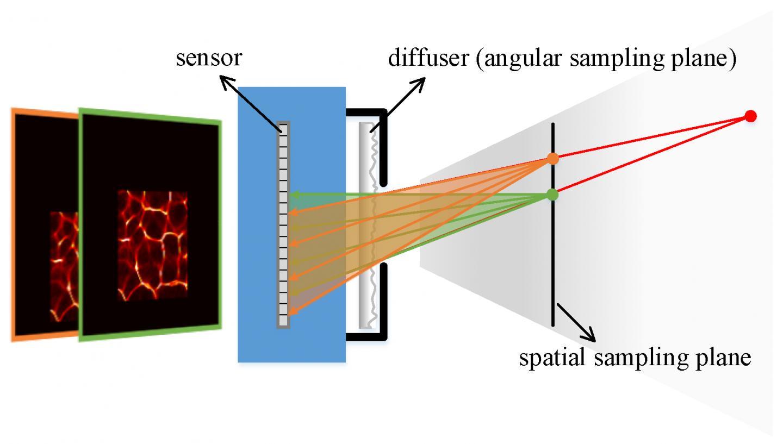 Schematic Diagram Of Lensless Light-field Imaging Through Diffuser Encoding