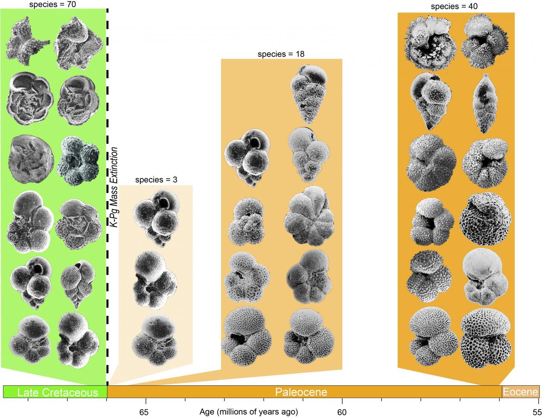 Cretaceous Planktic Foraminifera