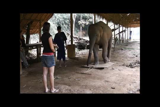 Elephant Demonstration of Body Awareness
