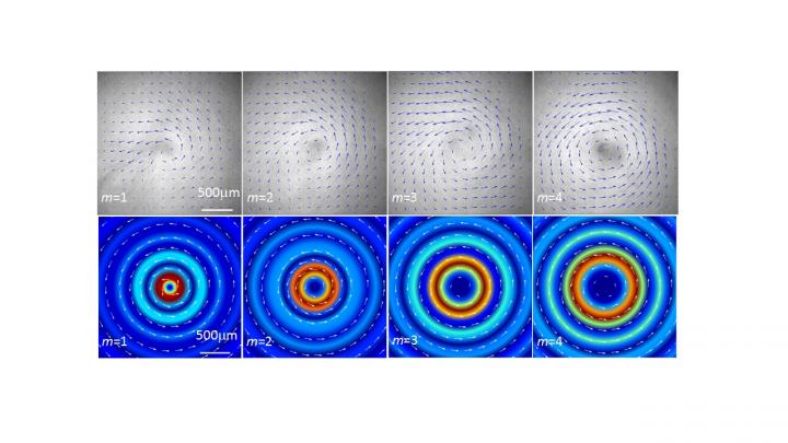 Microparticles Twisting in An Acoustic Vortex