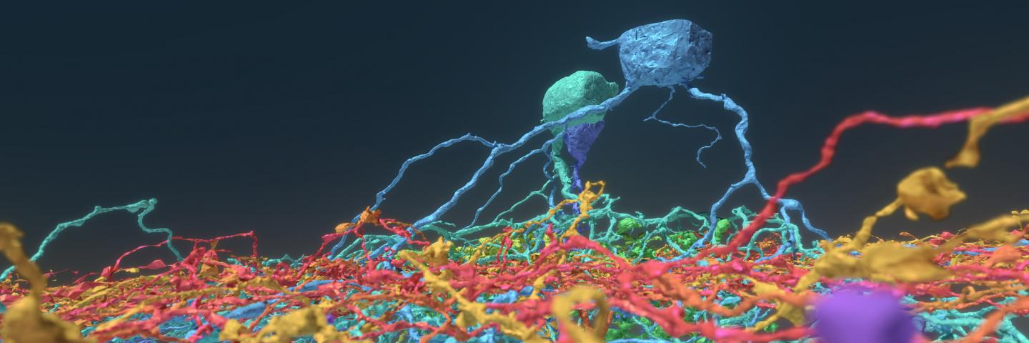 Princeton Researchers Crowdsource Brain Mapping with Gamers