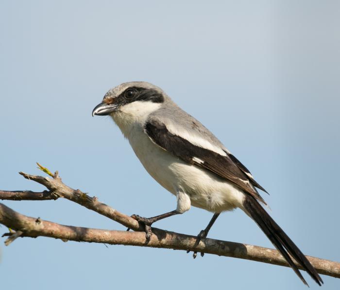 Bird Eye Size Tied to Habitat, Diet