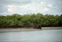 Intertidal Barrier Trap