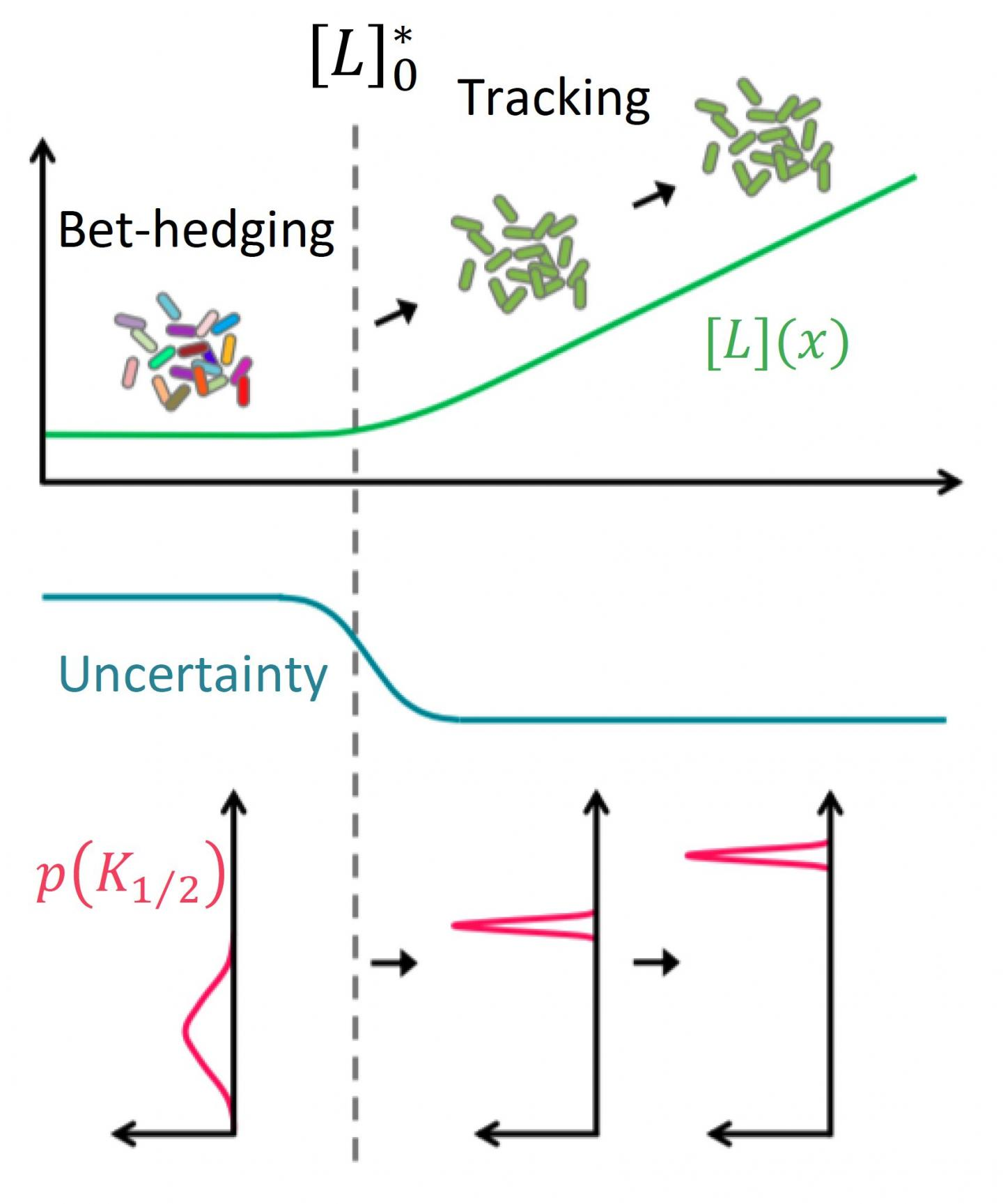 Dynamic risk management by cell populations