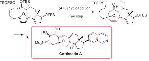 Key Step in the Synthetic Route to Cortistatin A