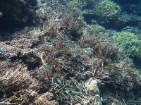 Coal Reef Bleaching