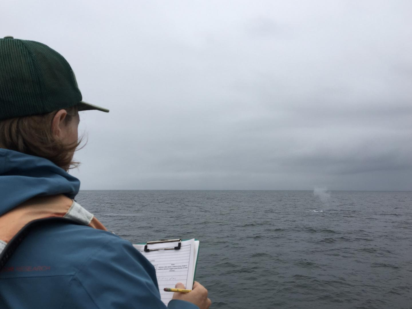 Observing whales