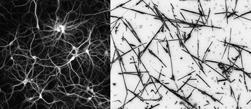 Neural network and nanowire network