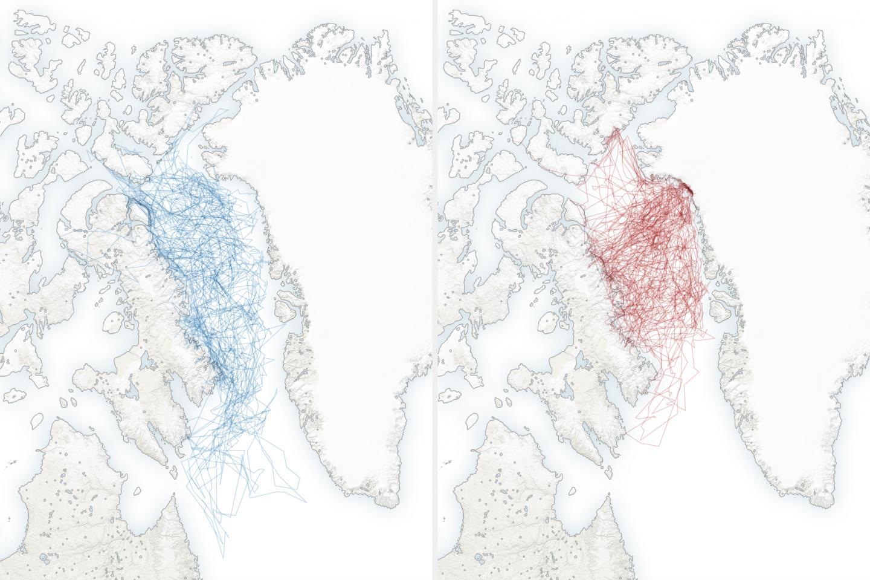 Polar Bear Movements