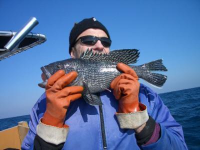 Black Sea Bass with Barotrauma
