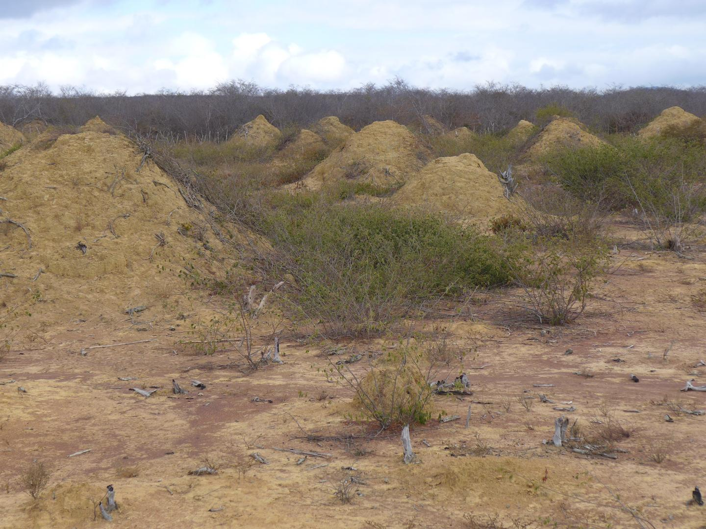 Termite Mounds (1 of 3)
