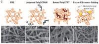 PolySTAT Fibrin Network Comparison