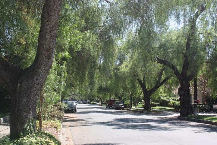 California Street Trees