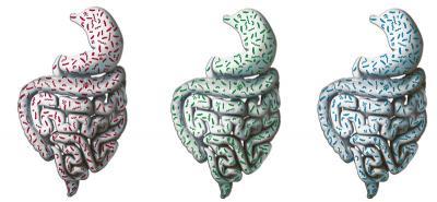 Humans' 3 Gut Types