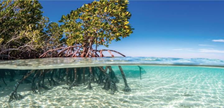 Creating a lab mangrove helps to identify new bacteria