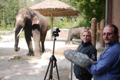 An Elephant that Speaks Korean (1 of 3)