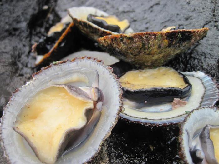 ʻOpihi Age, Growth, and Longevity Influenced by Hawaiian Intertidal Environment