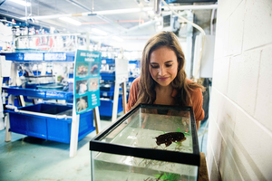 Alex Schnell with cuttlefish tank at Marine Biological Laboratory
