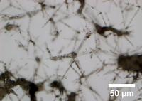 Microscopic image of the hydrogel