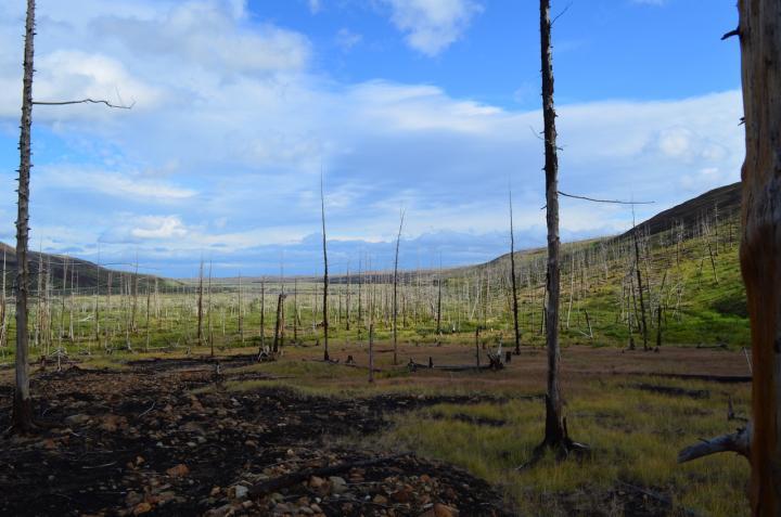 Forest near Norilsk