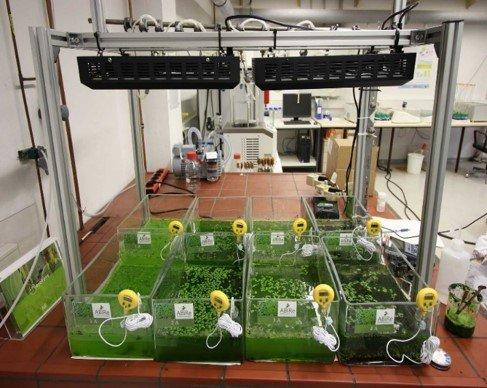 Scientists from Russia and Germany to Develop New Biotechnology Using Algae