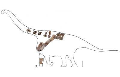 New Titanosaurus, <I>Yongjinglong datangi</I>