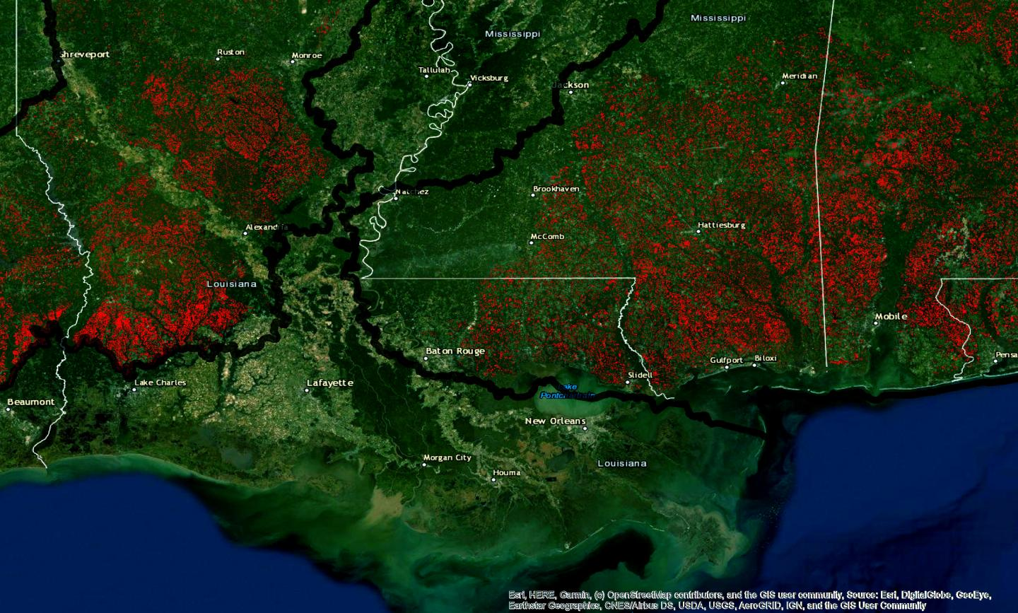Habitat loss for the Red-cockaded woodpecker