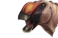 <em>Aquilarhinus Palimentus</em>