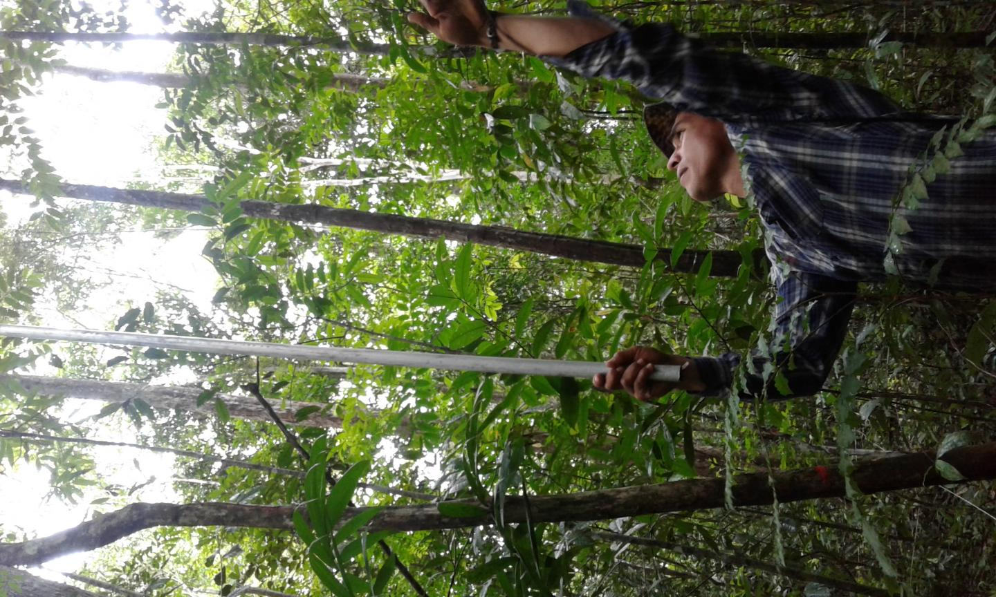 Scientist Collecting Leaves in a Secondary Forest in Brazil