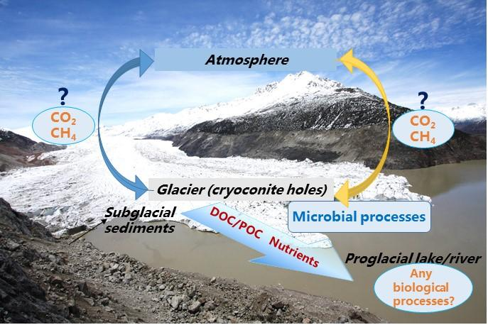 Conceptual diagram of the carbon cycle within a glacial basin in the Tibetan Plateau.