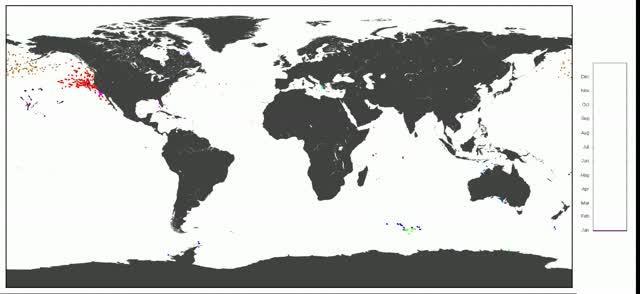 Marine Animals Explore the Ocean in Similar Ways