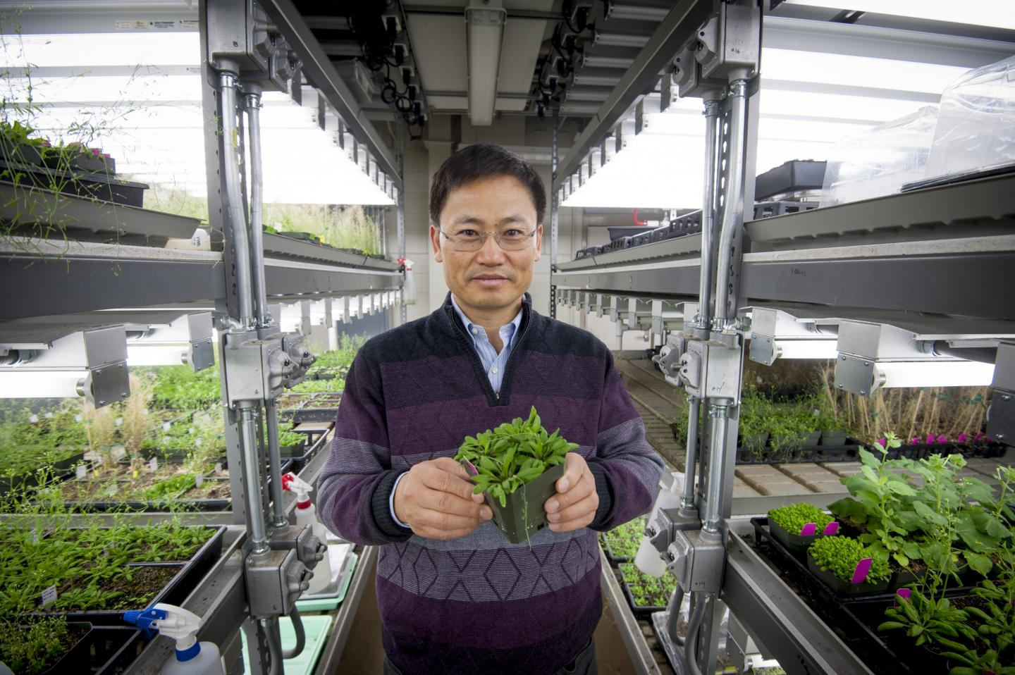 Demystifying How Plants Handle Stress