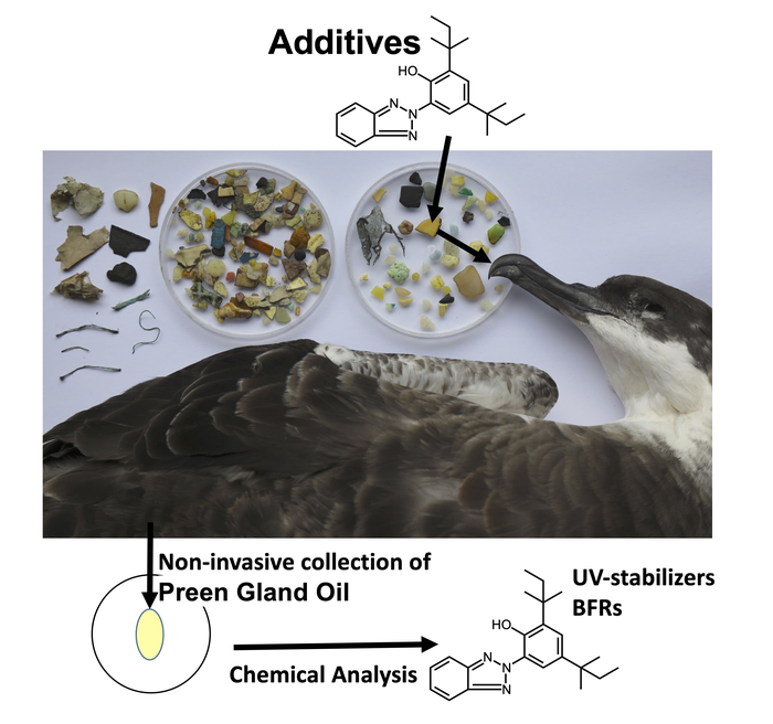 Bioaccumulation of additives from ingested plastics in seabirds' preen gland oil