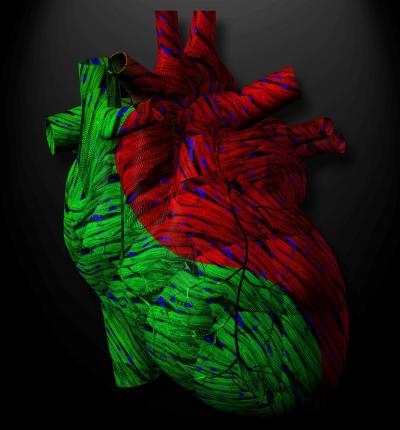 APJ's Yin-Yang Role in Cardiac Function