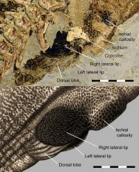 Close up and reconstruction