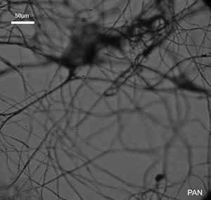Polyacrylonitrile (PAN) nanofiber mesh capturing water aerosols