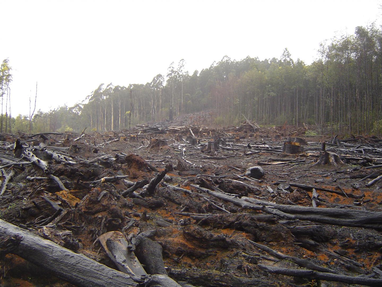 Deforestation in Australia's Toolangi Park