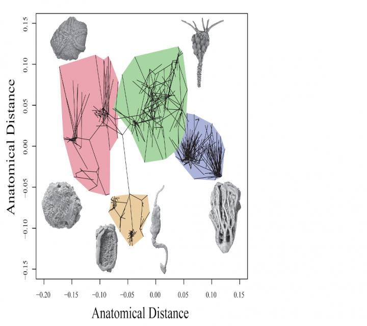 Two-dimensional representation of the range of features found within ancient echinoderms