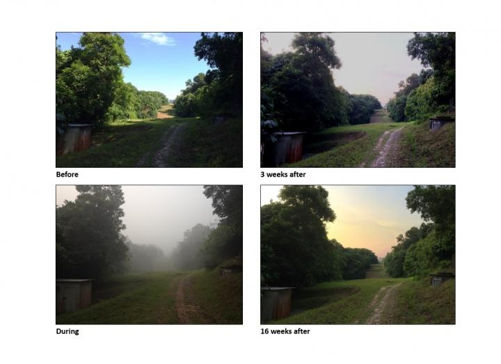Pollution Impact of Forest Fire Haze