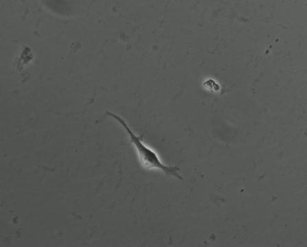 Pair of Stem Cells