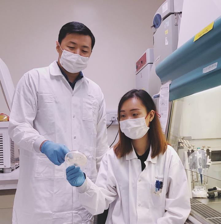 SMART AMR researchers Boon Chong Goh (left) and Linh Chi Dam (right) evaluate the bacterial cells after treatment with lysins