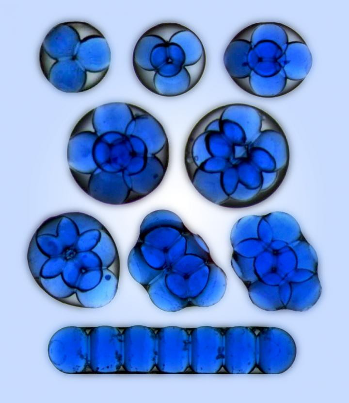 Mesoscale Atoms (Structures Formed by Microdroplets of Water Trapped in a Drop of Oil) Produced at I