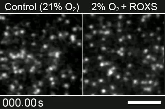 Movie Showing Slowed Photobleaching Using the New Method Developed at OIST