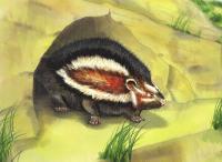 Artistic reconstruction of the Dead Sea crested rat subspecies