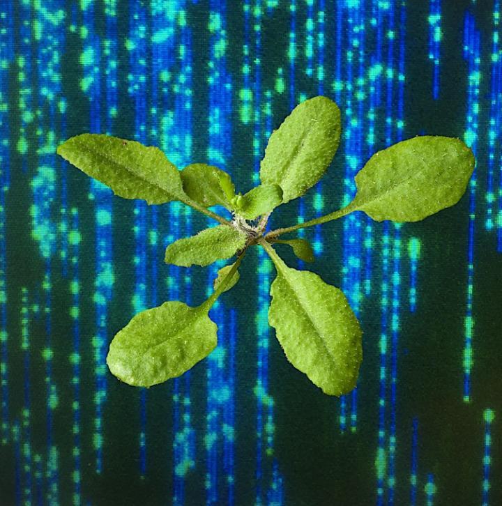Ecker lab -- The Matrix