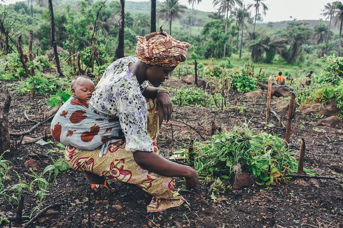 Multimedia Helps Increase Uptake of Sustainable Agricultural Intensification in Four African Countries