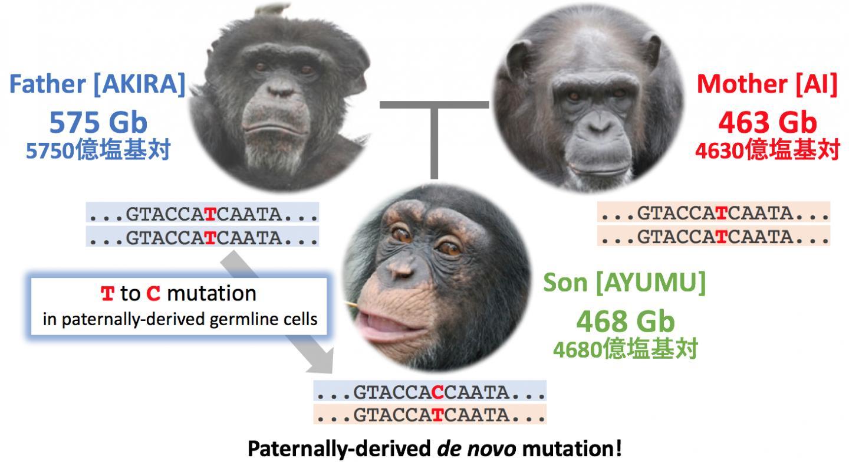 Deep Sequencing Reveals Mutation Rates