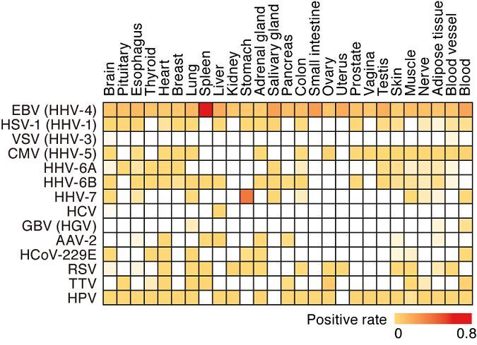 Figure 1 ?Human tissue virome atlas