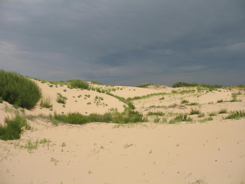 Degraded vegetation in Mongolia