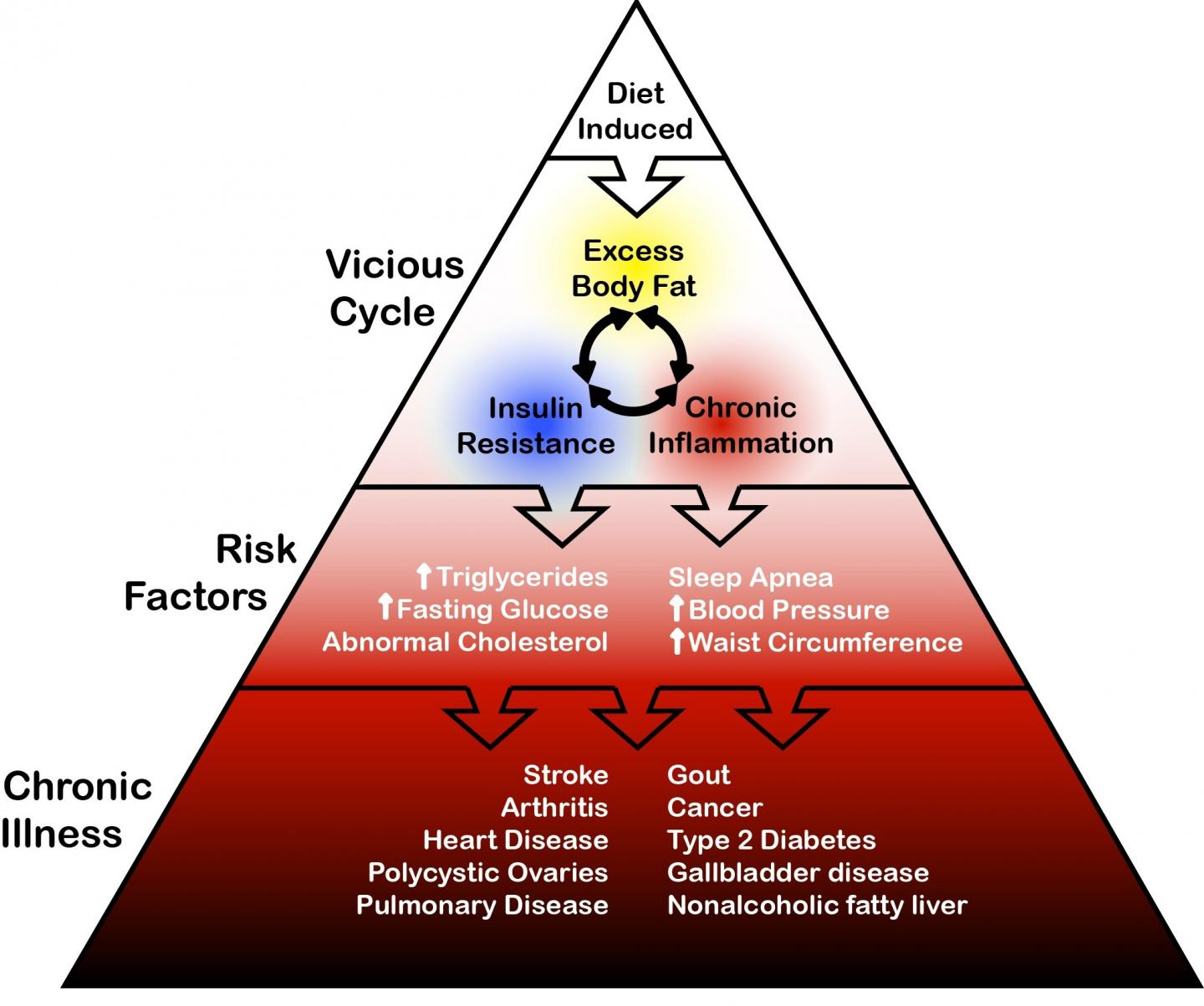General Schematic of Relationships between Diet, Overfat, Some Risk Factors, and Chronic Illness